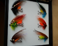 "Templedog Salmon Fly 1"" Selection"